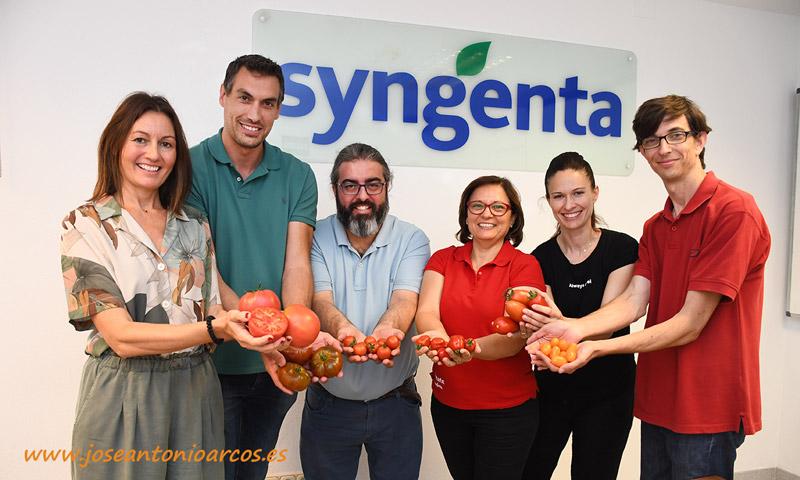 Variedades de tomate de Syngenta adaptadas a diferentes condiciones y ciclos de cultivo - joseantonioarcos.es