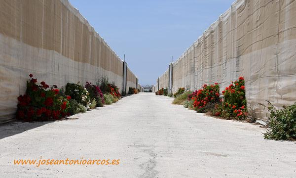 Invernaderos de Campojoyma en Retamar. /joseantonioarcos.es
