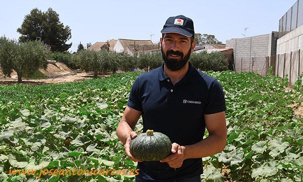 Calabaza tipo Delica. Takii Seed. /joseantonioarcos.es