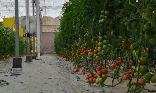Técnicos agrícolas de Almería en China-josenatonioarcos.es
