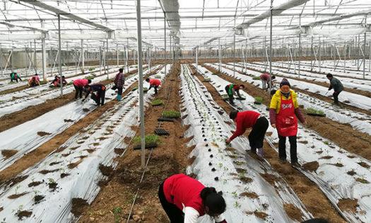 Agricultura en china coon técnicos agrícolas de Almería-joseantonioarcos.es