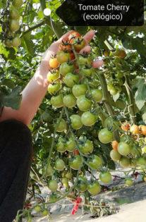 Invernaderos en China y técnicos agrícolas en Almería-joseantonioarcos.es