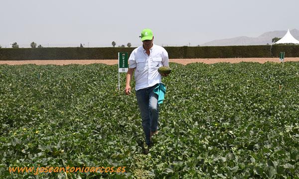 Diego Maestre con una pieza del nuevo melón mini 34-148 RZ. /joseantonioarcos.es