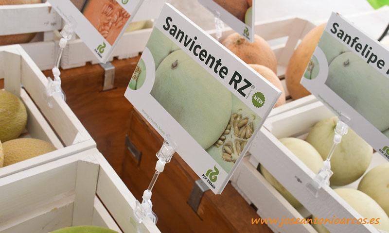 Melones Honey Dew. Sanvicente. Sanfelipe. Rijk Zwaan. /joseantonioarcos.es