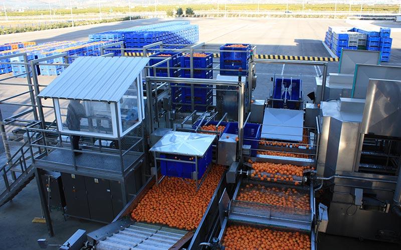 Industria de zumos. Cítricos. /joseantonioarcos.es