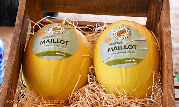 Melón amarillo Maillot de Syngenta. /joseantonioarcos.es