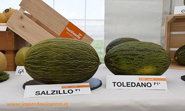 Melones piel de sapo de Nunhems. /joseantonioarcos.es