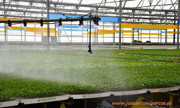 Plántulas hortícolas de El Plantel Semilleros. /joseantonioarcos.es