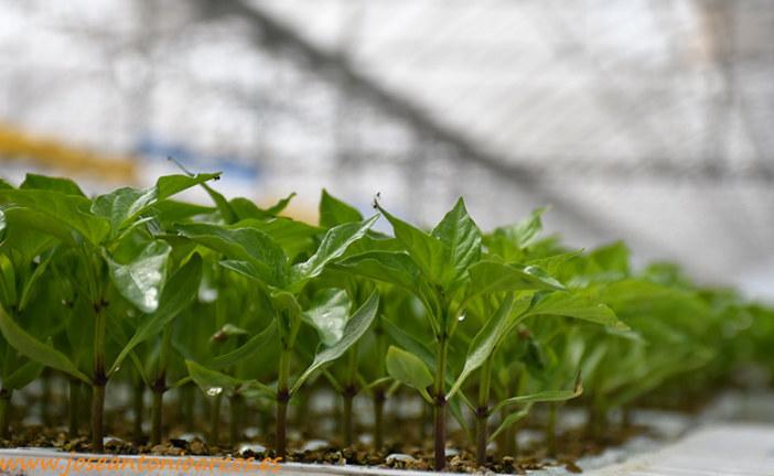 Las plántulas incorporan microorganismos desde el semillero