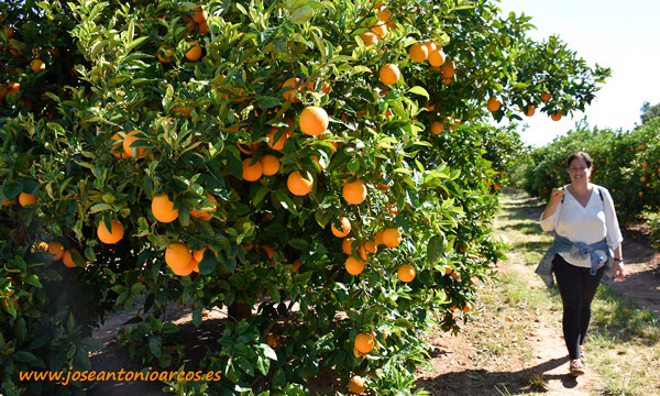 Naranjas de Anecoop en Valencia. /joseantonioarcos.es