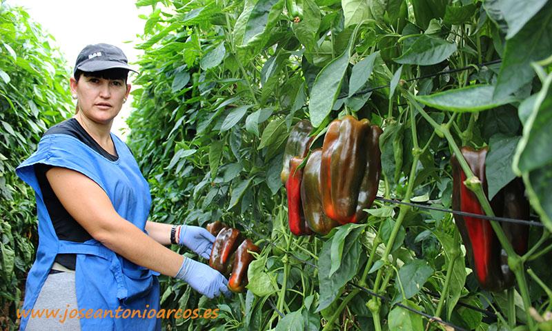 Ana Campillo, agricultora almeriense. /joseantonioarcos.es