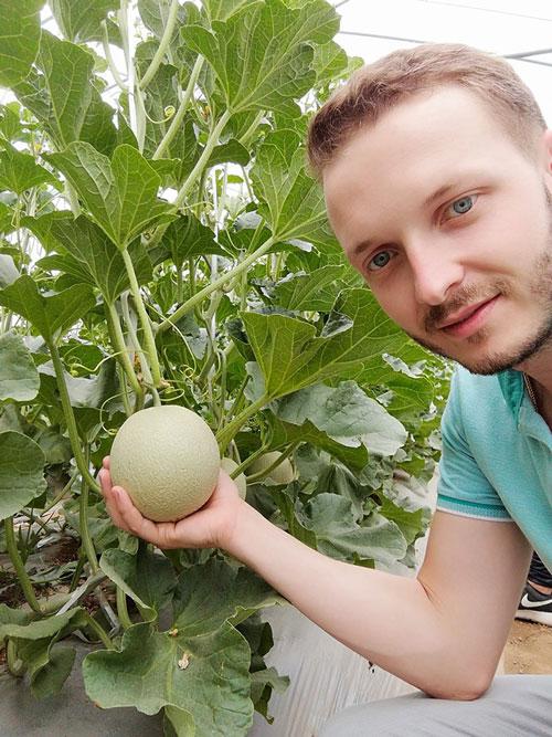 Cultivo de melón Yubari en China -joseantonioarcos.es
