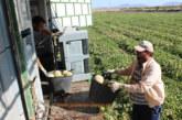 Asaja alerta del endeudamiento del agricultor murciano