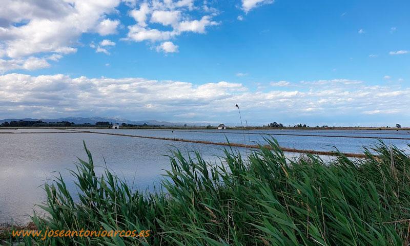 Arrozales en el Delta del Ebro. /joseantonioarcos.es