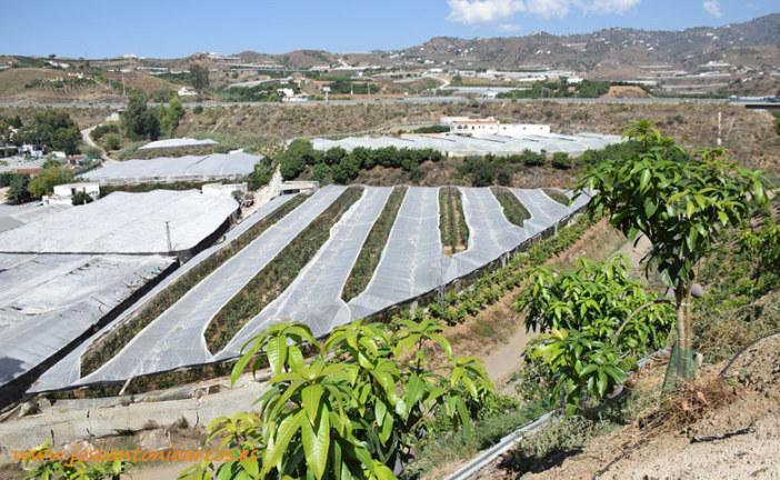 Málaga, líder en exportación de subtropicales