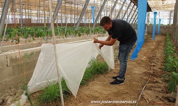 Javier Castillo muestra un búnker de plantas de cebada. Otro elemento más dentro de un modelo que favorece la entomofauna, /joseantonioarcos.es