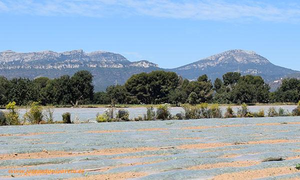 Verdcamp Fruits, Tarragona. /joseantonioarcos.es