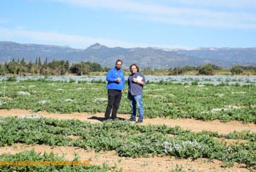 Verdcamp nos muestra la hortofruticultura de Tarragona