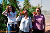 El edén de frutales de Anecoop en Valencia