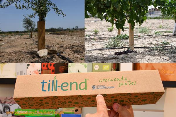 Envase de cartón para protección de árboles. /joseantonioarcos.es