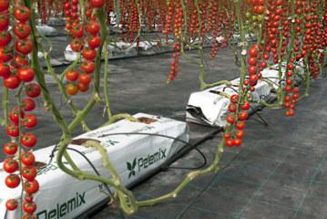 Nuevas plantaciones. Qué sistema elegir, ¿hidropónico o mixto?