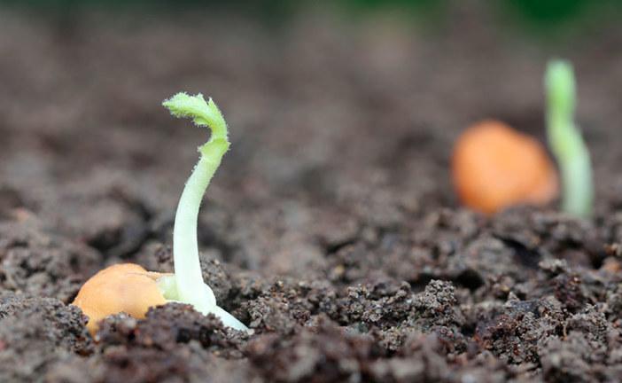 9 de septiembre. Día de la agricultura: retos y desafíos