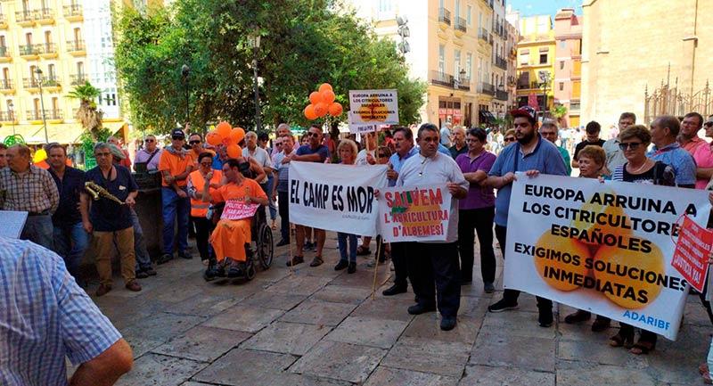 Citricultores valencianos protestan por la muerte de la citricultura en España. /joseantonioarcos.es