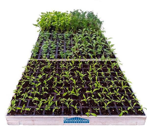 Kits con cinco especies de plantas reservorio de Cristalplant. /joseantonioarcos.es
