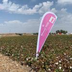 La sanidad vegetal en otros cultivos como el algodón