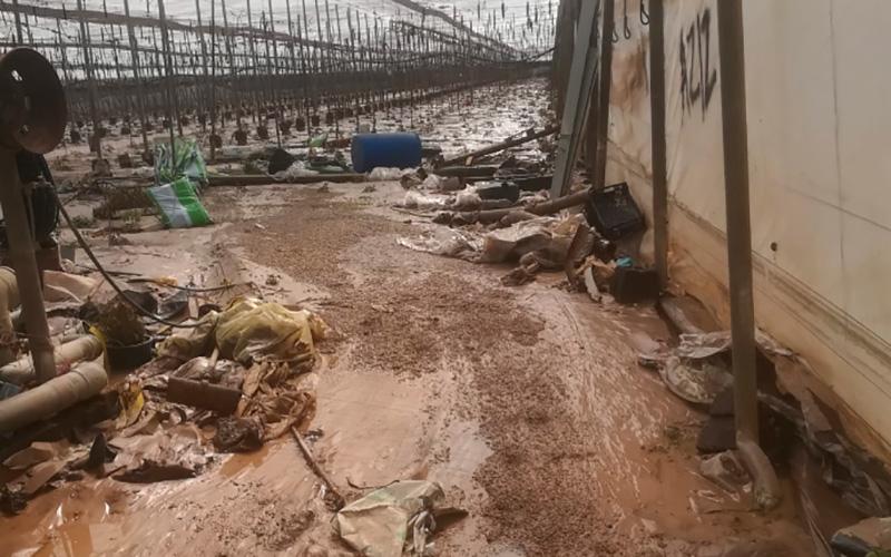UPA calcula graves daños en la agricultura por la gota fría. /joseantonioarcos.es