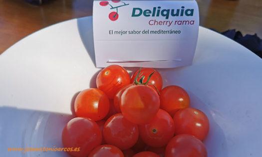 Tomate cherry Deliquia. Rijk Zwaan. /joseantonioarcos.es