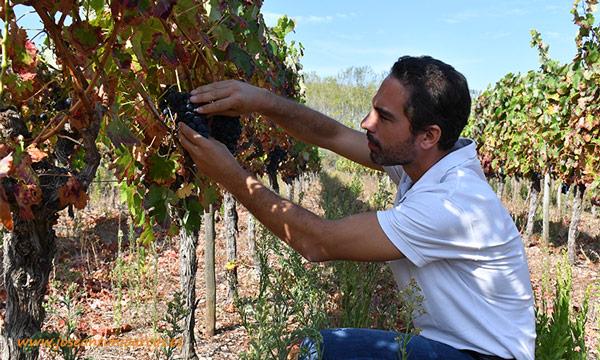 Pedro Cabanita, Crop Manager Field Crops & Product Manager en Compo Expert. /joseantonioarcos.es