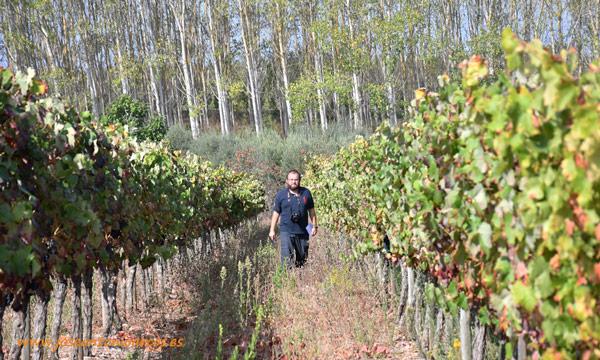 José Antonio Arcos entre viñedos en Portugal. /joseantonioarcos.es