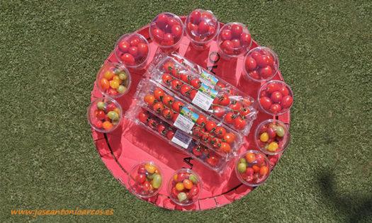 Premier Rijk Zwaan. Tomates. /joseantonioarcos.es
