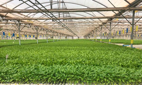 Ventajas de utilización de fibra de coco en semilleros, Pelemix-joseantonioarcos.es