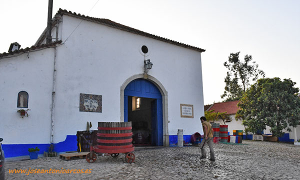 Vendimia en la Quinta do Olival da Murta. Portugal. /joseantonioarcos.es