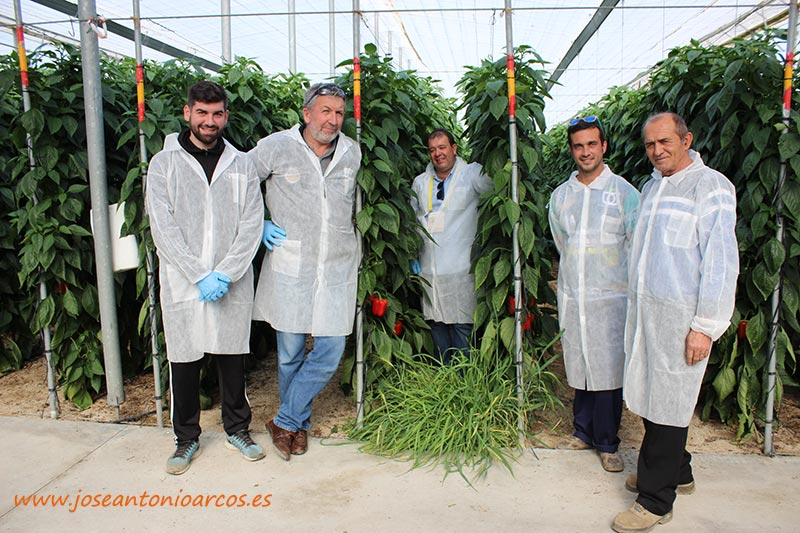 Omar Kaidi, de Clause, con Juan Rodríguez, padre e hijo de Vícar; y Antonio Rodríguez, padre e hijo, también agricultores, de Roquetas de Mar. /joseantonioarcos.es