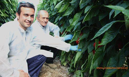 Antonio Rodríguez, padre e hijo, agricultores de Roquetas. /joseantonioarcos.es