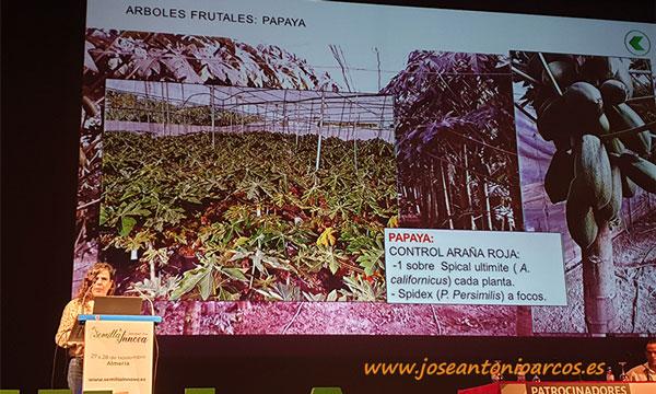 Control biológico de la araña roja en cultivo de papaya-koppert-joseantonioarcos.es