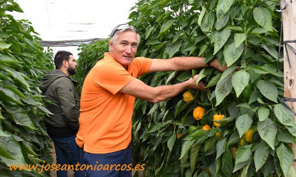 Agricultor Antonio Céspedes Piqueras. Invernadero con productos de humus de Nostoc. /joseantonioarcos.es