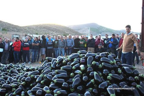 Los agricultores tiran en Dalías berenjenas y pimientos por los bajos precios. /joseantonioarcos.es