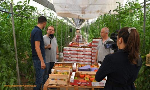 El Agro Auténtico y Entérate Diario con Naturinda en un invernadero de tomate de El Ejido. /joseantonioarcos.es