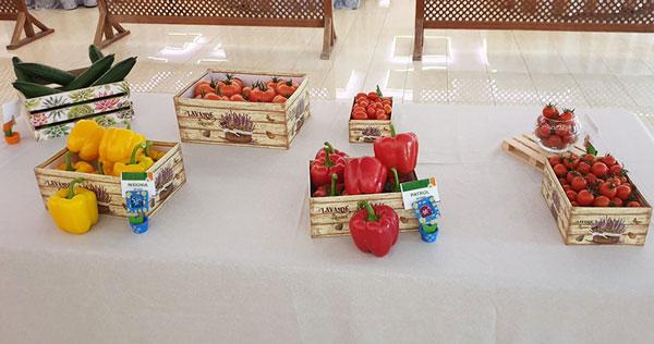 Nuevas variedades de pimiento, pepino y tomate cherry de Hazera-joseantonioarcos.es