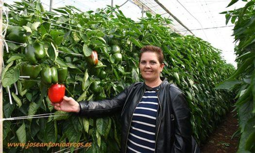 a Franciscas Escobar, agricultora de pimiento california rojo Abraham de HM CLause-joseantonioarcos.es