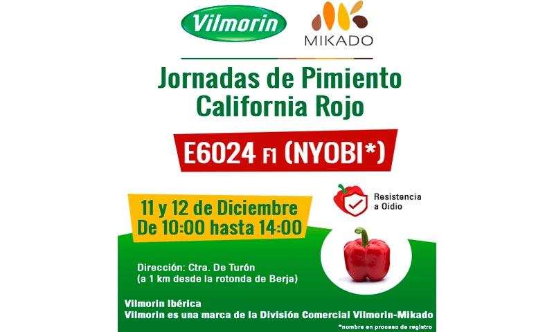 Días 11 y 12 de diciembre. Jornadas de pimiento california rojo de Vilmorin