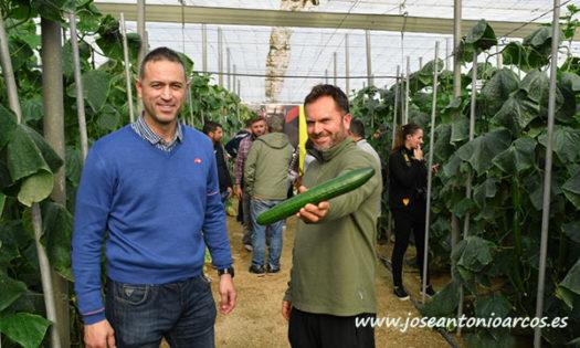 Pepinos Valdemar y Randall de Syngenta. /joseantonioarcos.es