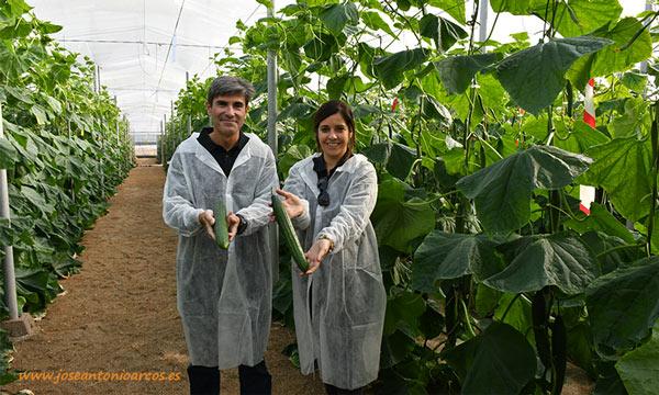 Jesús Abad, genetista de pepino de Syngenta, y Almudena Castillo, ayudante de breeder. /joseantonioarcos.es