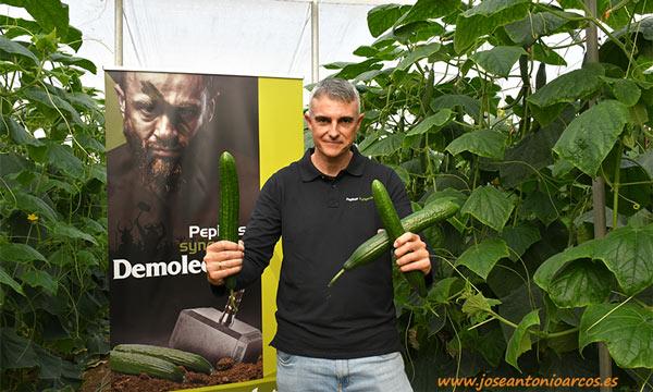Víctor García, jefe de producto de pepino para España de Syngenta, con la variedad Randall. /joseantonioarcos.es