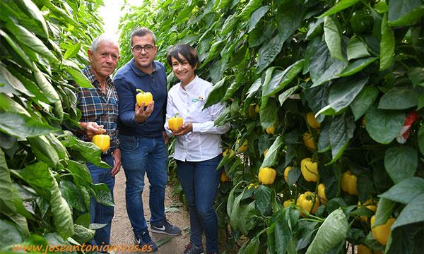 Manuel y Raúl, agricultores de Matagorda y San Nicolás, con Dolores Alcántara, de Vilmorin. /joseantonioarcos.es