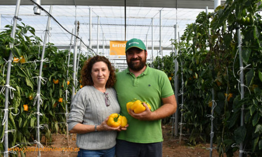 Familia Soto, productores de pimiento california Bastión de HM CLause-joseantonioarcos.es
